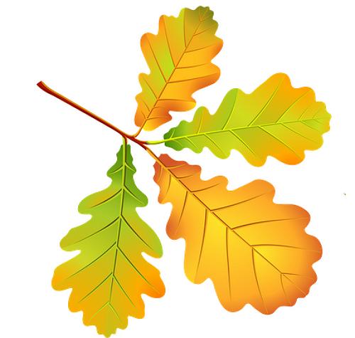 картинки листья рисунки